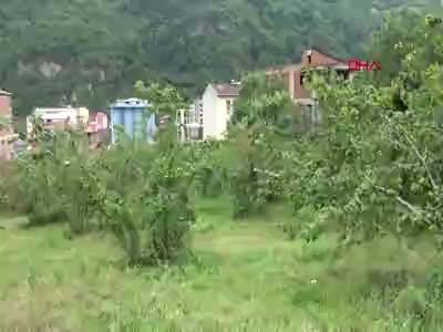 Karadeniz'de kahverengi kokarca boceği tehlikesi