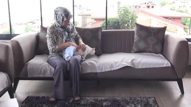 Felçli kedi onun sayesinde hayata tutundu
