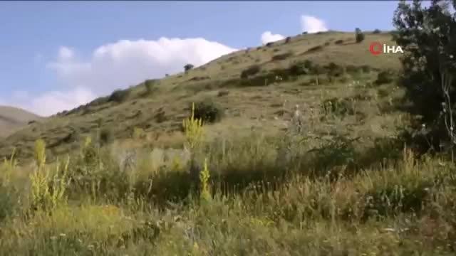 'Diriliş Ertuğrul' dizisinin sahnelerini aratmayan davet videosu